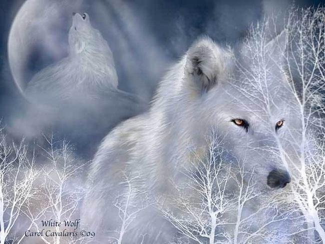 Бялата вълчица